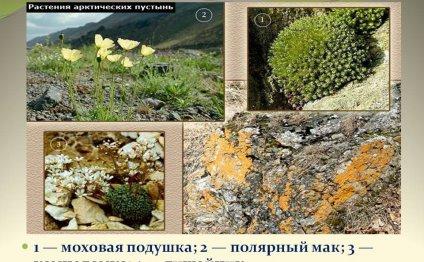 Растения арктических пустынь