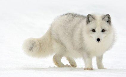 Арктика доклад для детей