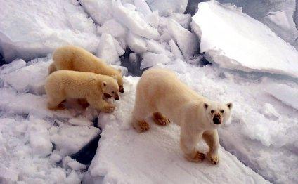 Арктика - Северный полюс