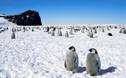 Какой полюс холоднее?