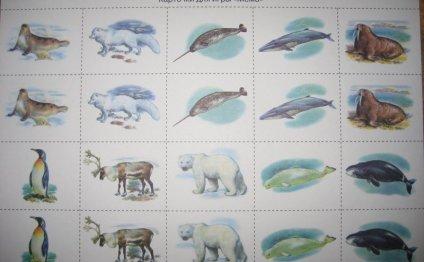Животные Арктики и Антарктики