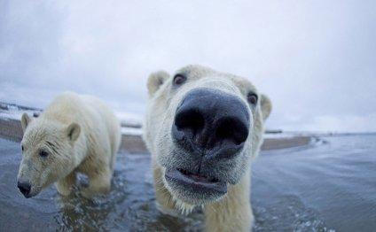 Слы прыгун на северный полюс