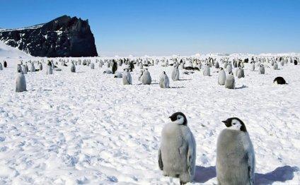 Тайна Антарктиды | Крамола