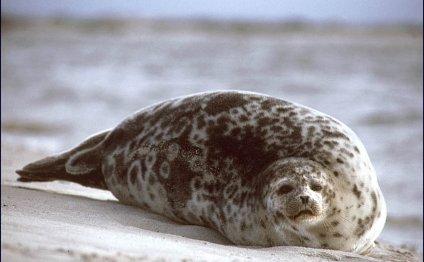 животные арктики: